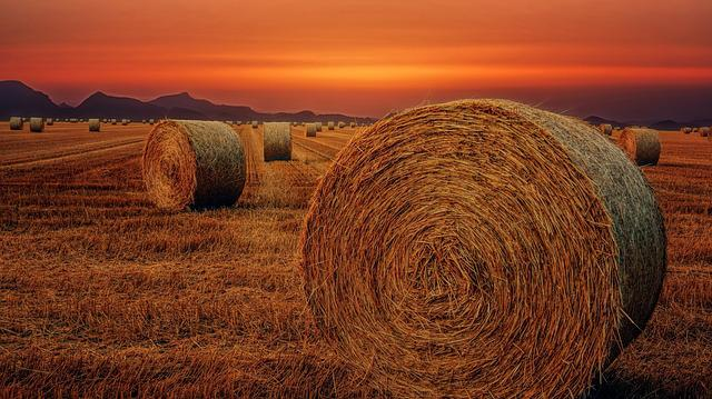 Straw, Hay, Nature, Landscape, Sky, Agriculture, Field