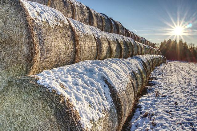 Snowy, Straw Bales, Straw, Snow, Winter, Round Bales