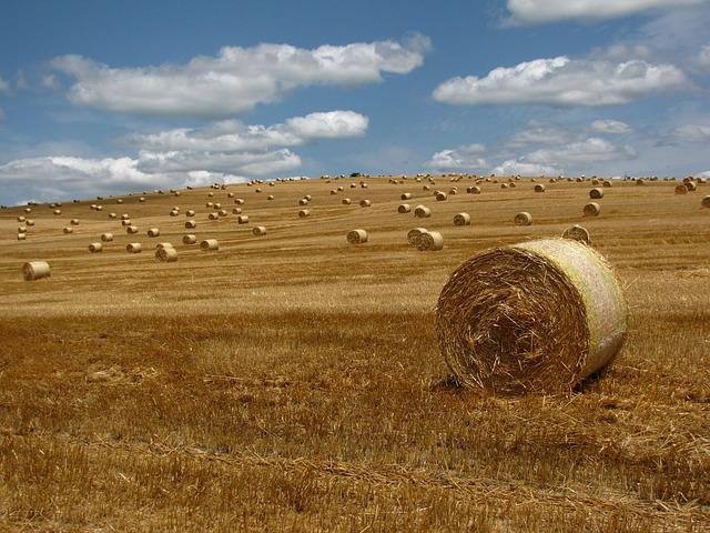 Straw, Bale, Meadow, Straw Bale, Region, Landscape