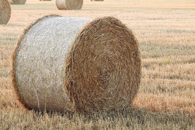 Straw Bales, Stubble, Summer, Straw, Round Bales