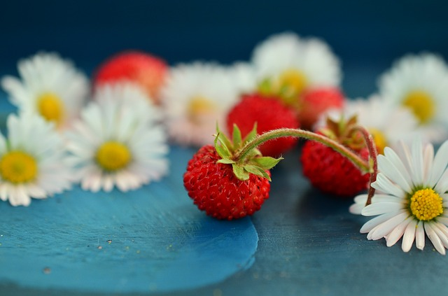 Strawberries, Wild Strawberries, Daisy, Still Life