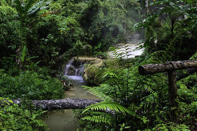 Forest Waterfall, Stream, Forest, Nature, Jungle, Green
