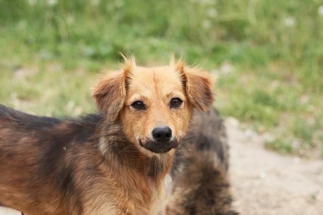Dog, Street, Animals, Brown, Small Dog, Curiosity