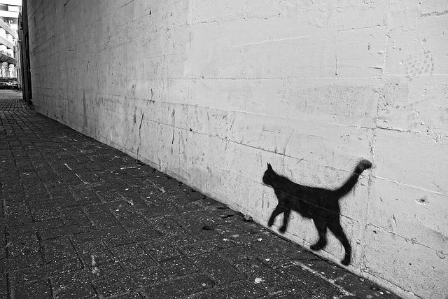 Graffiti, Wall, Cat, Spray, Paint, Drawing, Street Art