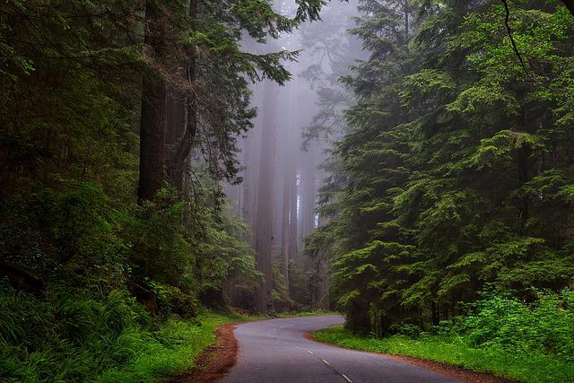 Trees, Fog, Street, Road, Lane, Lush, Greenery, Foliage