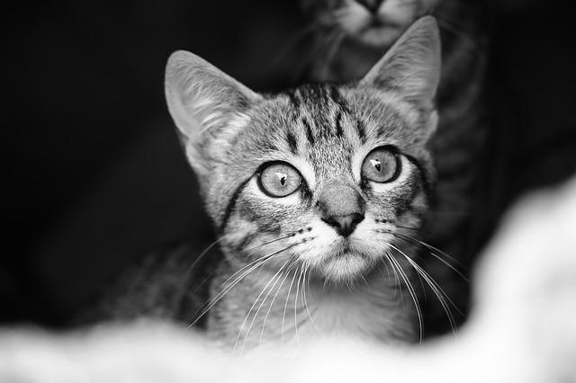 Cats, Street, Black And White, Look