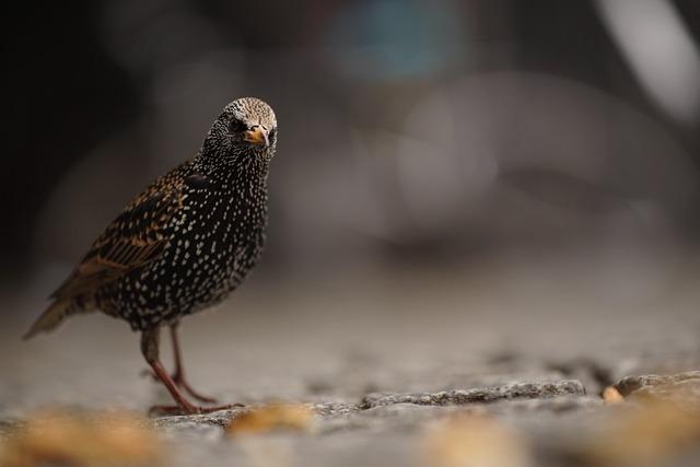 Starling, Bird, Berlin, Streets, City, Questionable