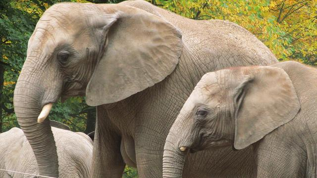 Elephant, Wuppertal, Zoo, Strength Lings, Families