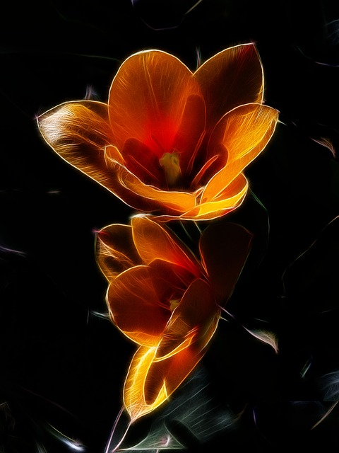 Fractalius, Tulip, Purchase Manniana Tulip, Stresa