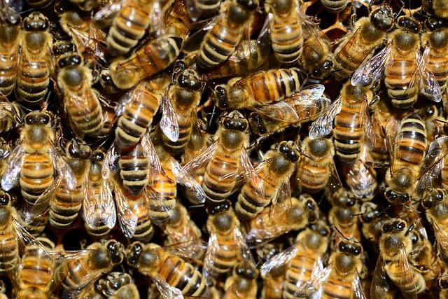 Honey, Bee, Water, Buckfast, Insect, Golden, Stripes