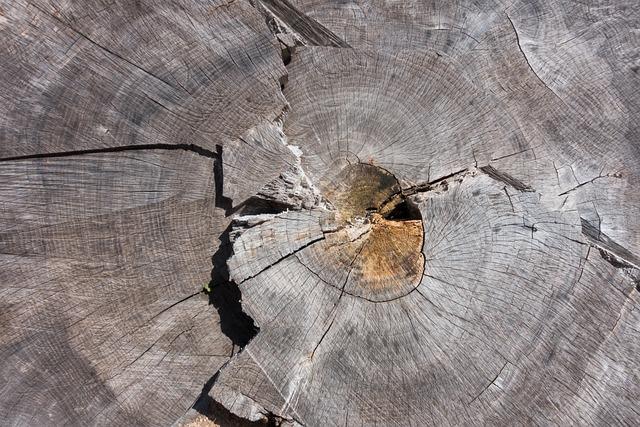 Tree, Tree Grates, Ash, Grain, Wood, Structure, Nature