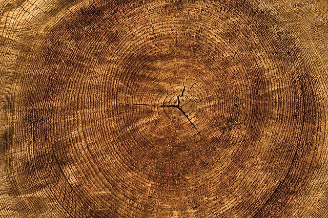 Texture, Tree, Annual Rings, Background, Structure
