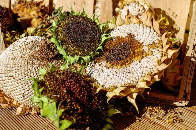 Sunflower, Stranded Tramples Over, Seeds, Structure