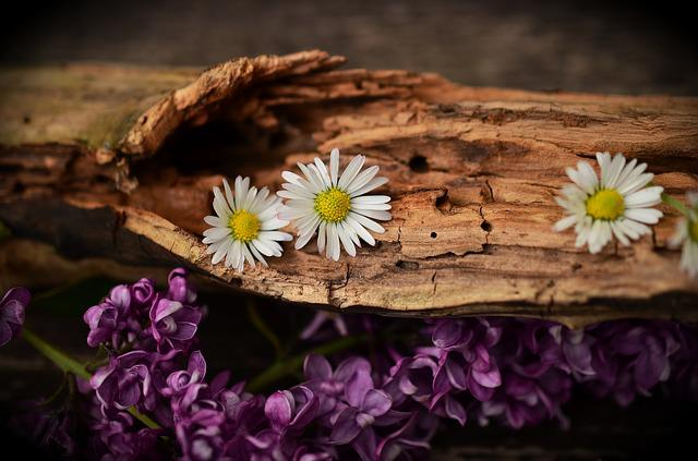 Wood, Old Wood, Weathered, Structure, Flowers, Daisy