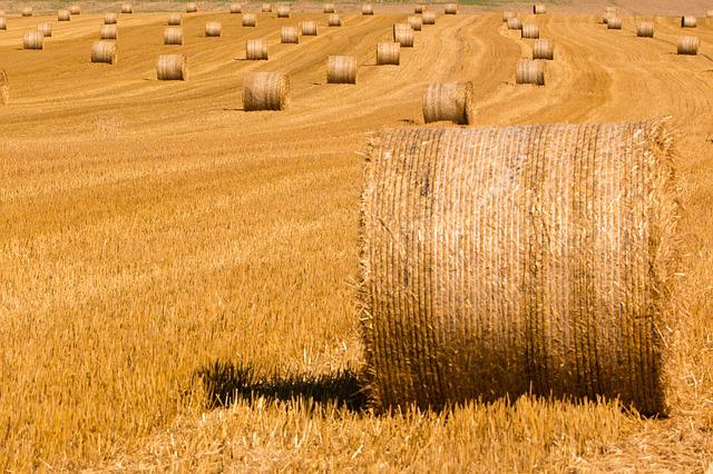 Summer, Straw, Straw Bales, Harvested, Stubble, Harvest