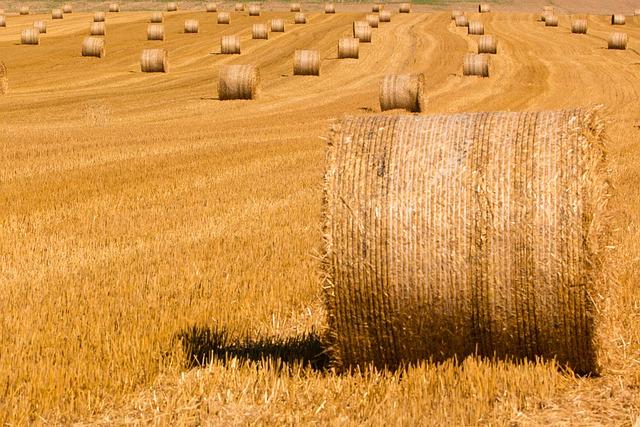 Summer, Straw, Straw Bales, Harvested, Stubble, Harvest