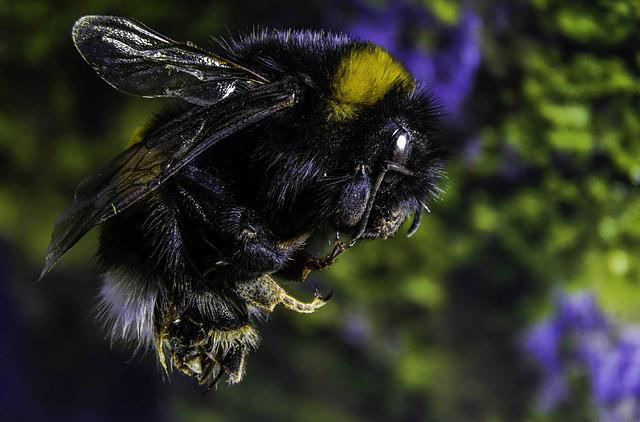 Bumble-bee, Insect, Macro, Nature, Studio, Folding