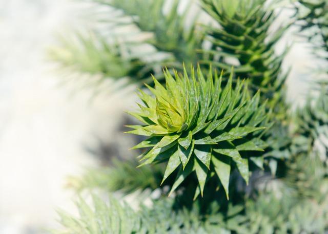 Cactus, Succulent, Plant, Nature, Garden, Flora, Spur