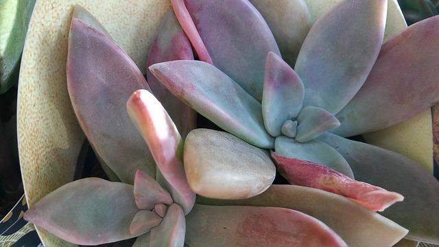 Flower, Nature, Flora, Desktop, Cactus, Succulent