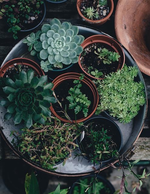 Flora, Flower Pots, Plants, Succulent
