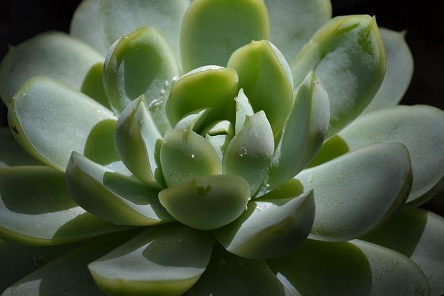 Succulent, Plant, Green, Botanical, Botany, Hipster