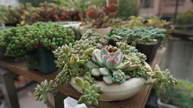 Succulent Plants, Green Plants, Succulent