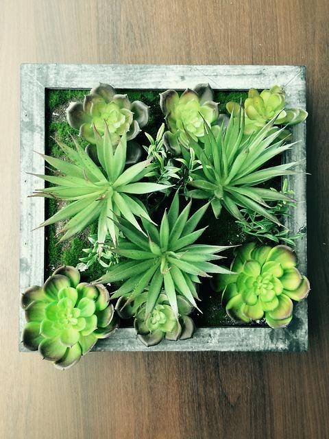 Plant, Succulent, Succulents