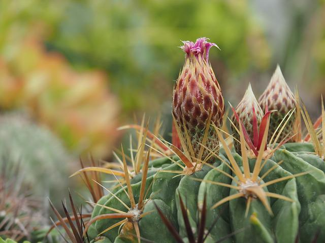 Cactus, The Pods, Succulents Botanical Garden