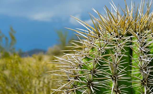 Nature, Desert, Plant, Cactus, Succulents, Sharp