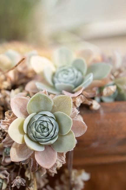 Succulents, Plant, Nature, Garden, Botanical