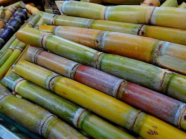 Sugar Cane, Licorice, Stimulant, Sugar Cane Harvest