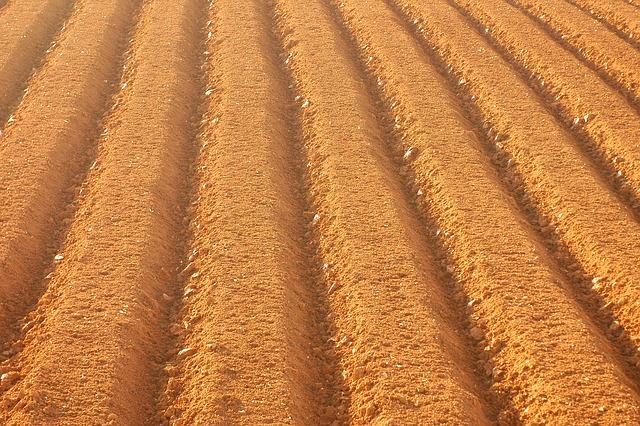 Farming, Field, Sulcus