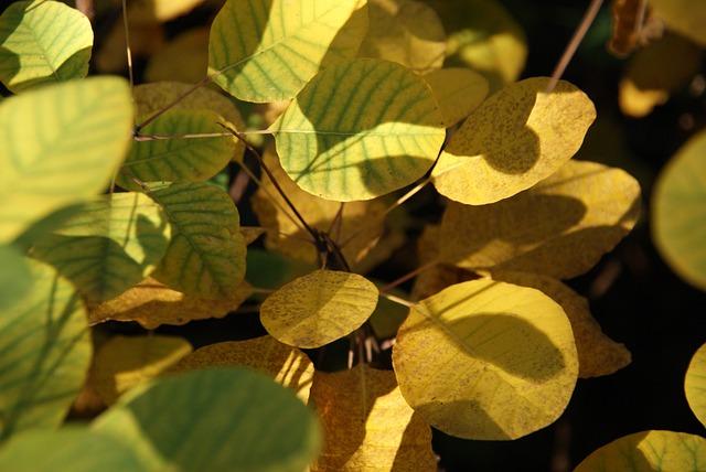 Leaves, Yellow, Autumn, Sumac, Foliage, Forest, Nature