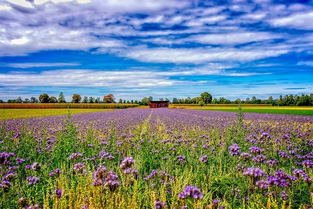 Agriculture, Landscape, Field, Rural, Nature, Summer