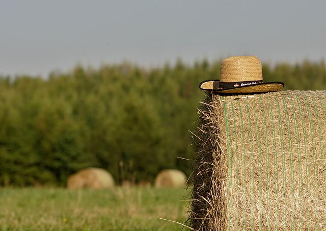 Summer, Straw, Bale Of Straw, Field, Hat