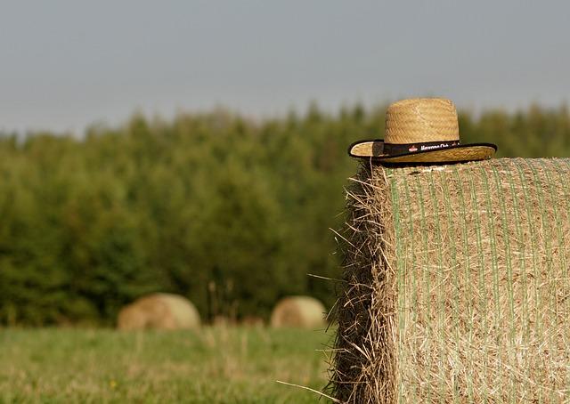 Summer, Straw, Bale Of Straw, Field, Hat