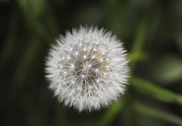 Flower, Plant, Summer, Barbed, Vegetation, Beautiful