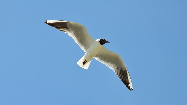 Birds, Seagull, Nature, Summer