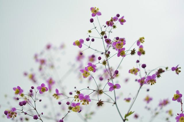 Flower, Floral, Blossom, Nature, Spring, Summer, Bloom