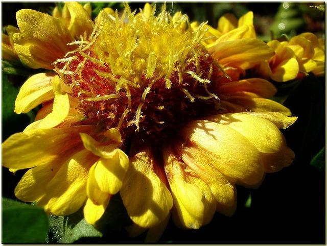 Blossom, Bloom, Flower, Yellow, Summer, Garden, Close