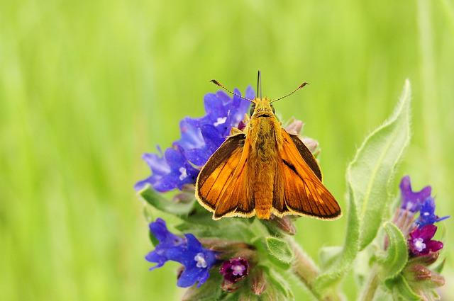 Nature, Flower, Summer, Butterfly Day, Insect