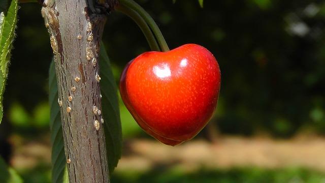 Cherry, Bing, Sweet Cherry, Red, Fruit, Summer