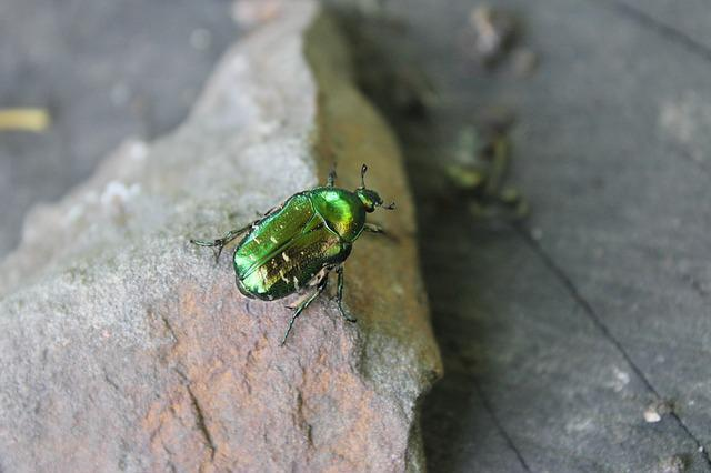 Summer, Insects, Beetle, Green, Nature, Macro, Closeup