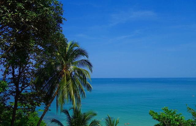 Summer, Nature, Tropical, Beach, Coast, Travel, Tree