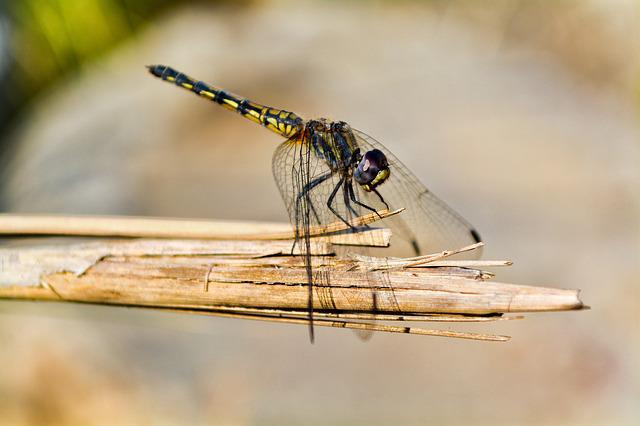 Dragonfly, Noon, Resting, Nature, Summer, Animal