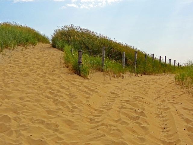 Way, Enjoy More Canters, Dunes, Summer, Nature Reserve