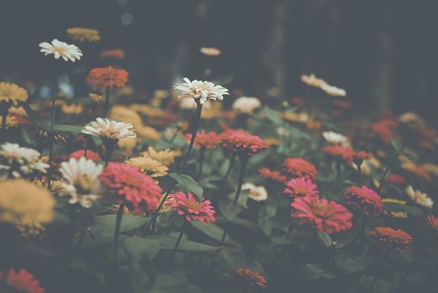 Flower, Filter, Nature, Garden, Summer, Outdoors, Plant