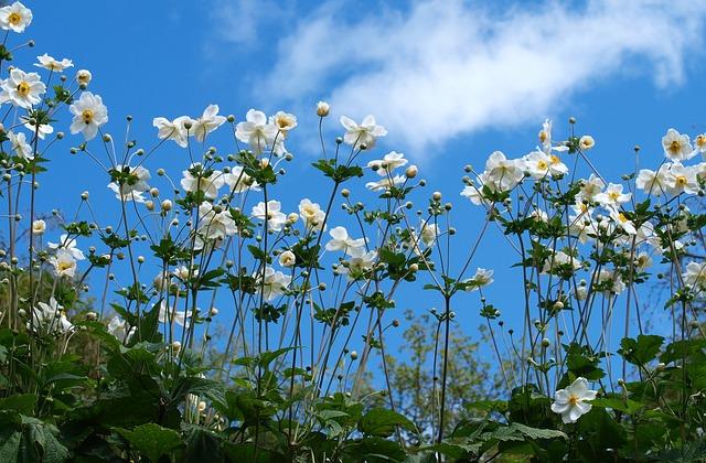 Flower, Flora, Nature, Summer, Garden, Floral, Sunny