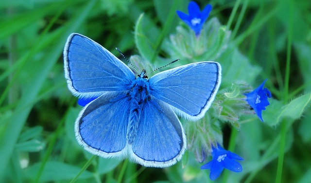 Nature, Summer, Flower, Plant, Garden, Butterfly Day