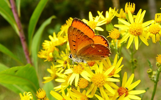 Nature, Insect, Butterfly Day, Flower, Summer